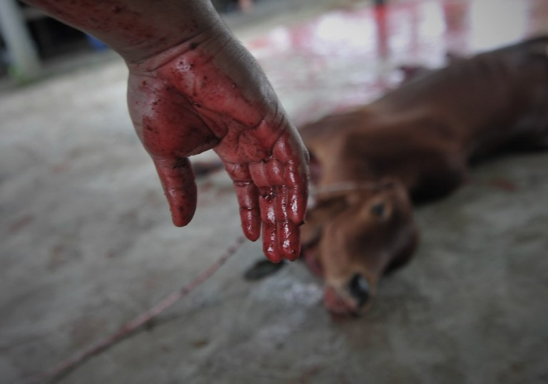 A man with blood on the her hands after slaughtered during Eid Al-Adha on October 16, 2013 in Kedah outside Kuala Lumpur, Malaysia. Day 2  Muslims around the world celebrate Eid al-Adha by slaughtering sheep, goats, cows and camels to commemorate Prophet Abraham's willingness to sacrifice his son, Ismail, on God's command.Photo: Firdaus Latif